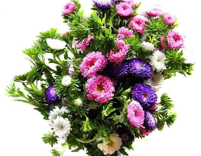 цветок ховея