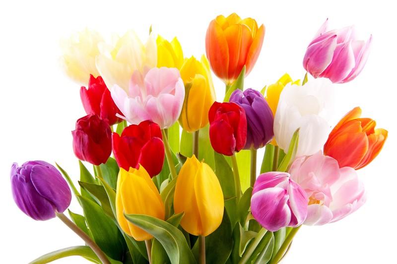 Где можно купить цветы тюльпаны город королев доставка цветов