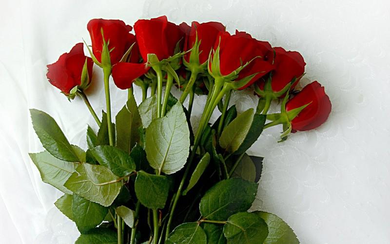 Где можно купить цветы ltitdj купить фотообои цветы