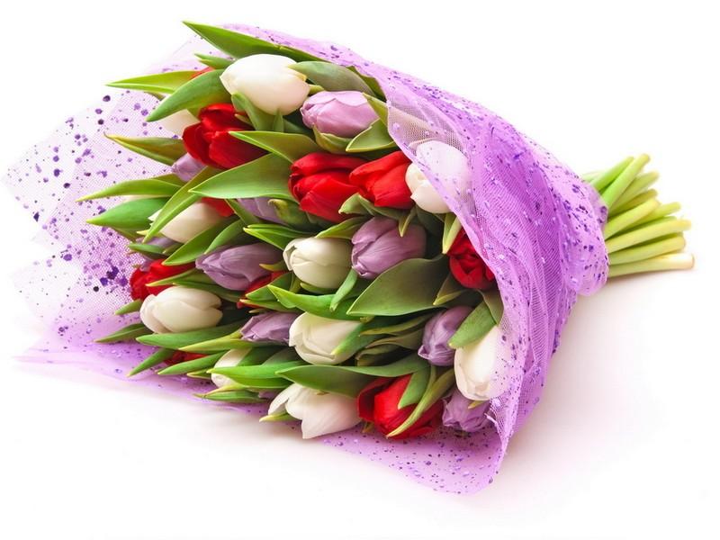 Где купить цветы иванове купить цветы ромашки г.красноярск
