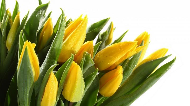 Доставка цветов москва одесса какой можно подарить недорогой подарок маме на 8 марта