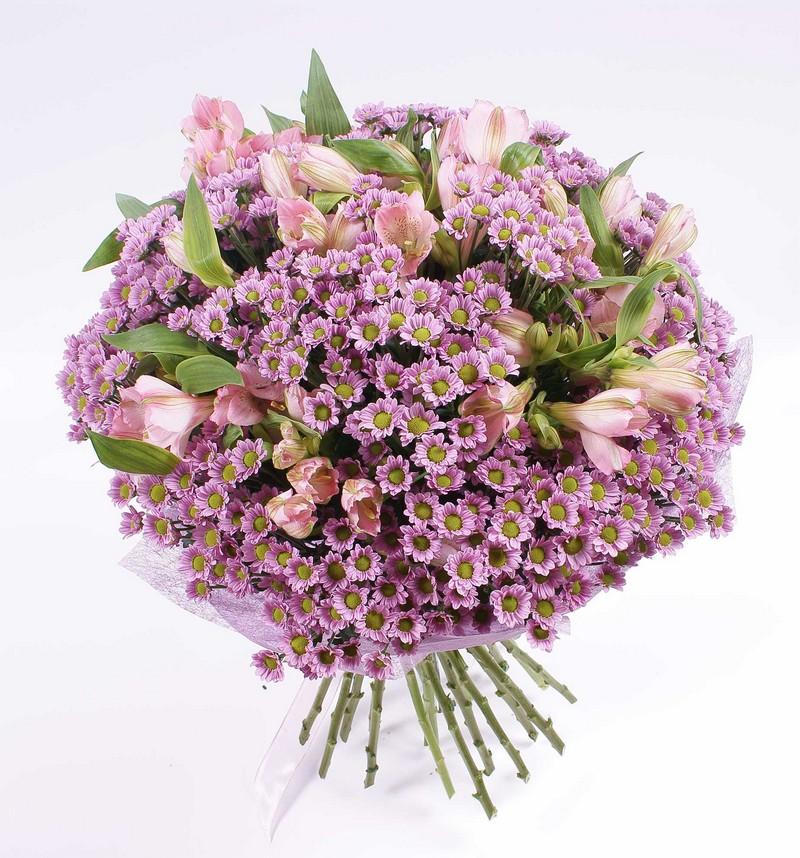 Где можно купить цветы diskus заказ цветов оптом из голландии в минск