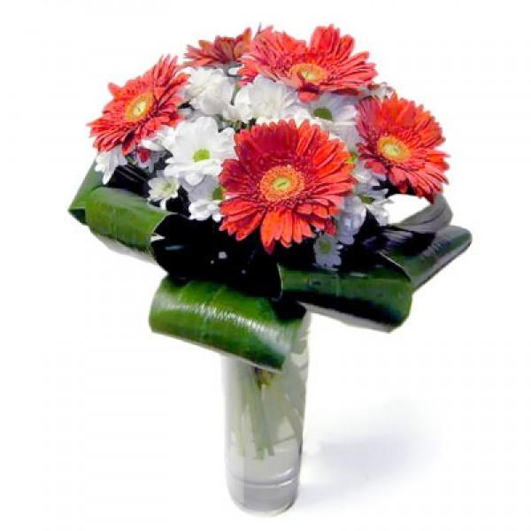 Купить цветы герберы в кинешме розы парковые канадские купить